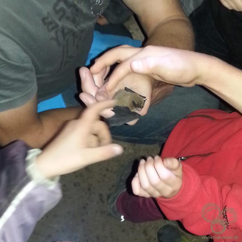 Fledermausnacht für Kinder