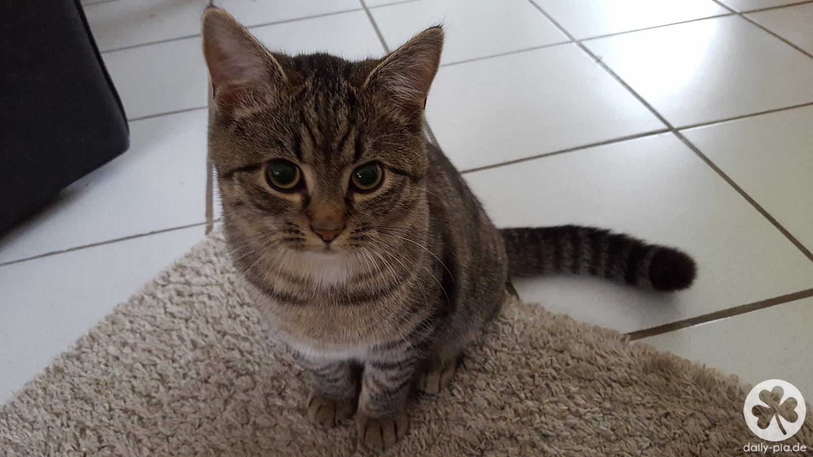 Katzencontent? Bitte schön.
