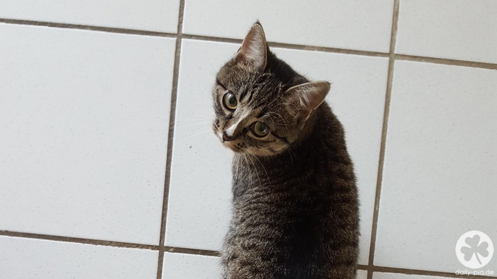 Tierarztbesuch und Katzen-Update